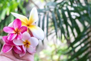 Blume Asien