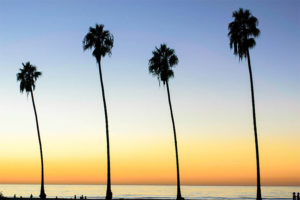 California Palm Trees 300x200 - California Palm Trees