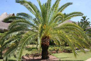 DR-Palm